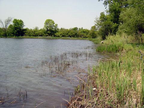 Grosse Ile, Michigan - Shoreline Stabilization - BEFORE